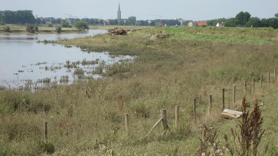 Eerste opruimactie langs Maas bij Roosteren gepland