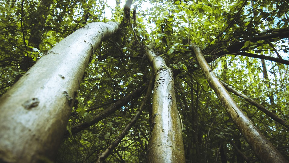 Actievoerders halen folie uit bomen Sterrebos voor vleermuizen