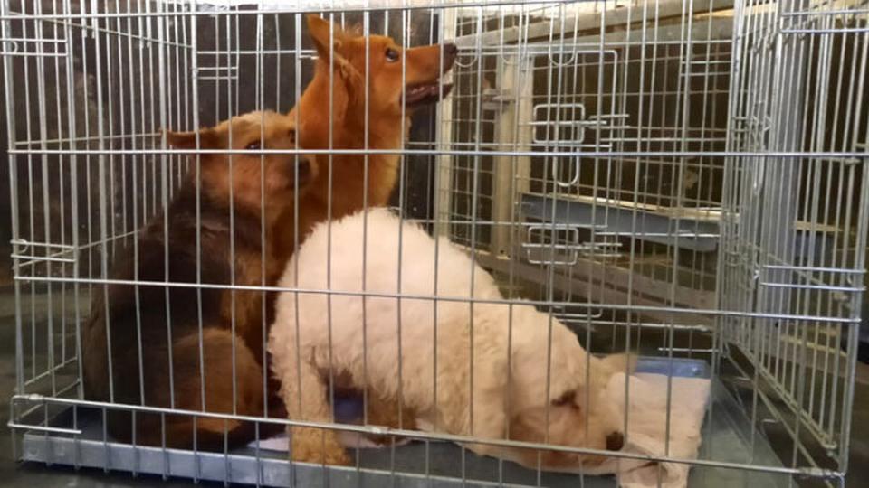 Tientallen verwaarloosde en zieke honden weggehaald bij fokker